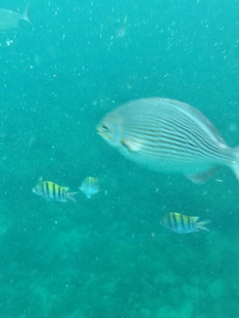 snorkeling in puerto vallarta